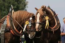 V sobotu na návštěvníky pardubického závodiště čeká program plný koní a jejich dovedností, v neděli se budou slavit především dožínky.