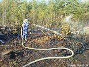 Dohašování lesního porostu