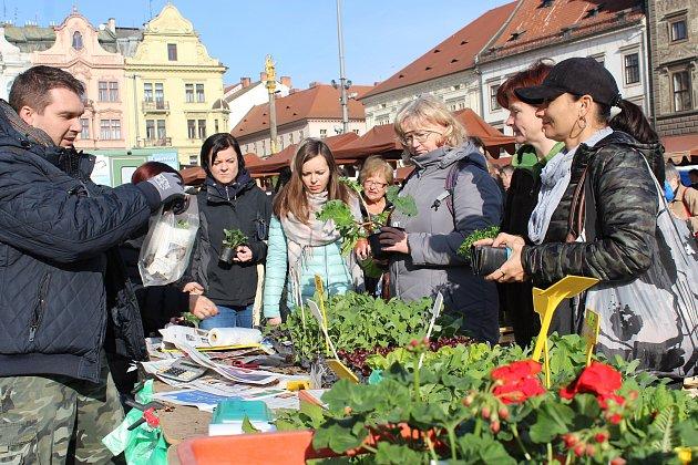 První Plzeňské farmářské trhy roku 2017 se v sobotu konaly tradičně na náměstí Republiky.