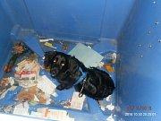 Pes, kterého nalezla mladá žena v kontejneru na papír