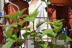 Festival pěstování bylinek u Branky