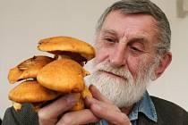 Mykolog Svatopluk Holec ukazuje houbu plaménku nádhernou. Holec už sbírá houby hlavně pro určování druhů