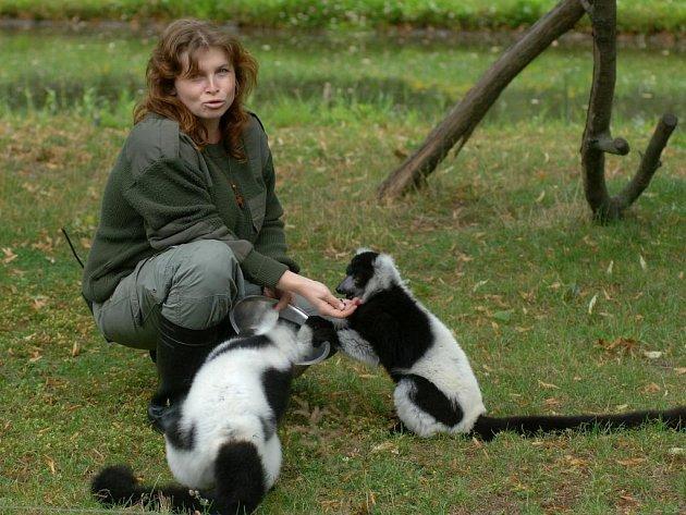 Ošetřovatelka opic Alena  Faflíková právě krmí lemury