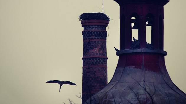Čápi sídlí na komíně v Dolní Lukavici.