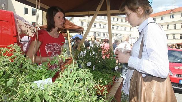 Farmářské trhy ve Škroupově ulici v Plzni