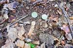 Přes čtyři sta mincí, které si ve 14. století někdo schoval nedaleko Kladrub na Stříbrsku, bylo uloženo kousek pod zemí v hliněné nádobě.