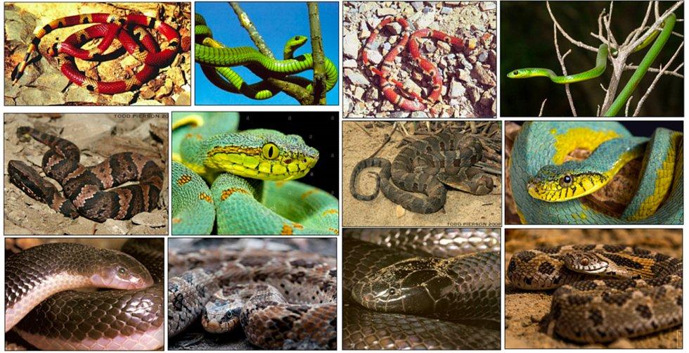 Obrázky hadů, které umí rozpoznat aplikace vytvořená Lukášem Pickem.