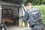 Liška se psinkou, kterou v roce 2012 chytili na území Plzně městští strážníci