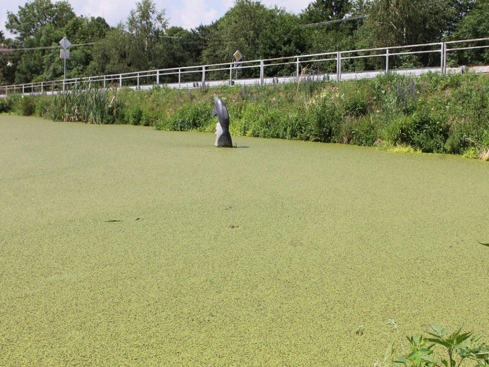 Okřehkem pokrytý Opatský rybník ve Vrčeni bere radost plavcům. Ještě před rokem se tu totiž mohli koupat