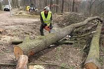 Kácení stromů v lochotínském parku