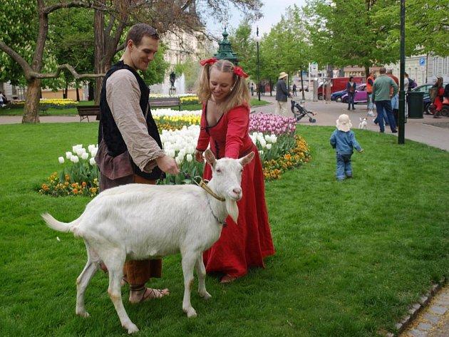 Před projekcí filmu Kozí příběh se před Měšťanskou besedou objevili kejklíři i živá koza.
