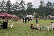 V Plasích se uskutečnila národní výstava poníků a koní