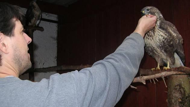 Zdeněk Kolman z Ekocentra ve Spáleném Poříčí se nyní stará o třináct ptáků. Opeřenci se do jeho péče dostali kvůli zranění nebo jako osiřelá ptáčata a do volné přírody se už nevrátí. Ročně projde jeho rukama na 350 zvířat