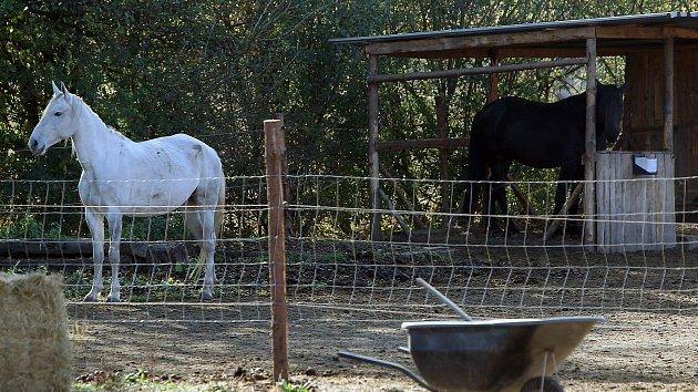 Ve výbězích pana Barchánka došlo k úhynu koně a veterinární správa a policie zahájily vyšetřování, aby se objasnilo zda došlo k týraní svěřených zvířat či nikoli.