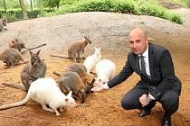 Jméno Eda dostalo bílé mládě klokana rudokrkého. V plzeňské zoo jej pokřtil náměstek primátora Roman Zarzycký.