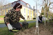 Kromě měsíce dubna začíná také návštěvnická sezóna hradů, zámků, klášterů... Přípravy na ni v těchto dnech finišují - na snímku plejí zahradnice růžové keře v areálu zámku Kozel.