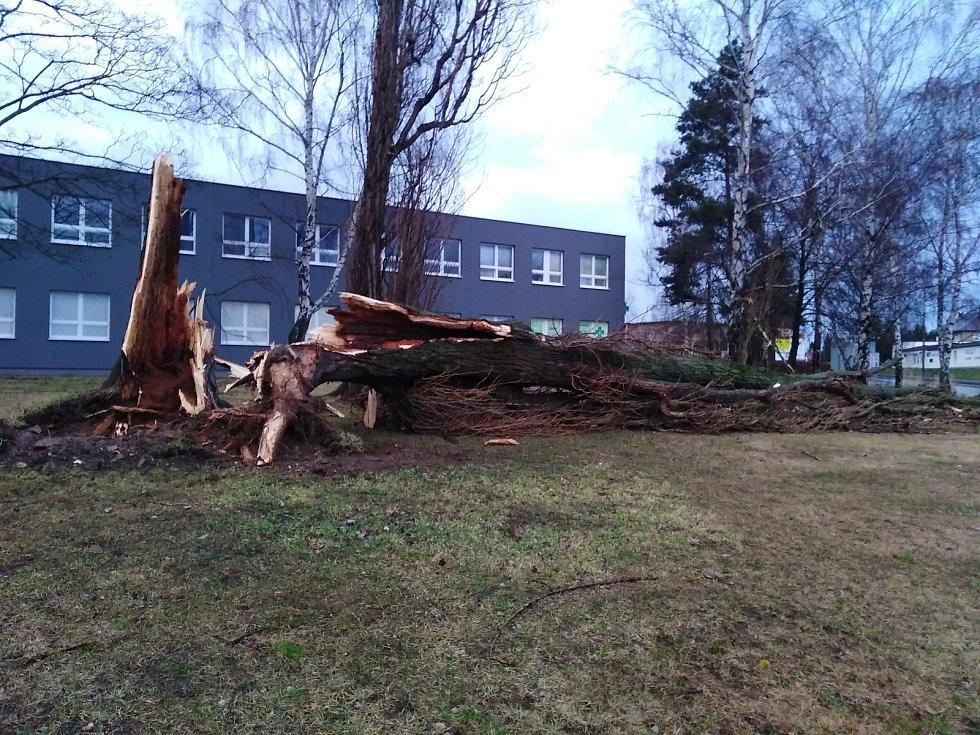 Vichřice Sabine zlomila strom u kruhového objezdu u Klatovské nemocnice.