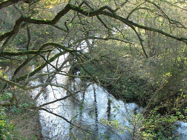 Řeka Úhlava
