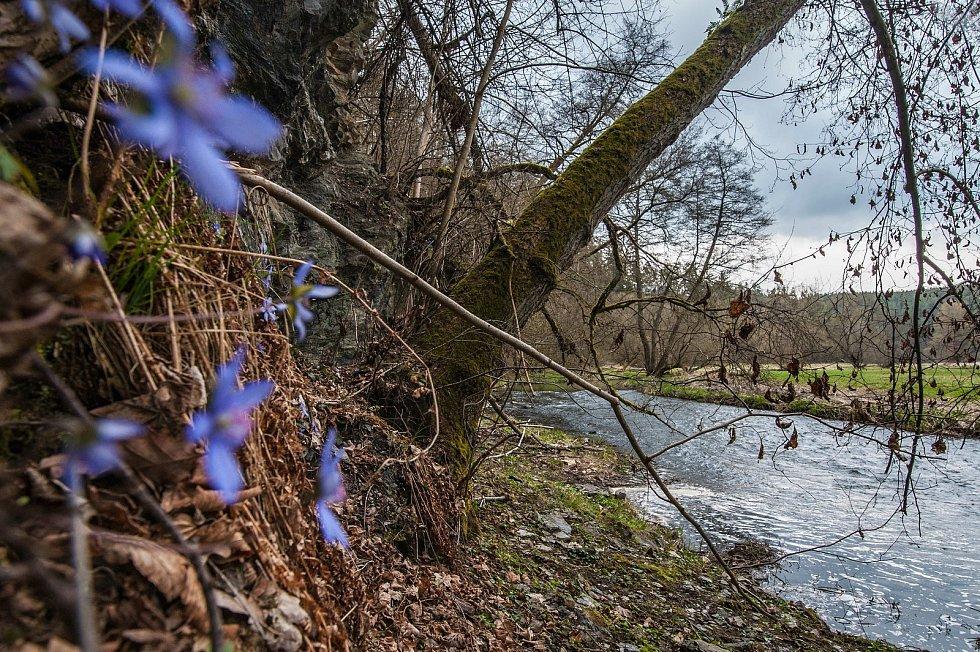 Cesta podél hlubokého údolí řeky střely pod obcí Koryta. V okolních skalkách roste hojná bylina Jaterník podléška.