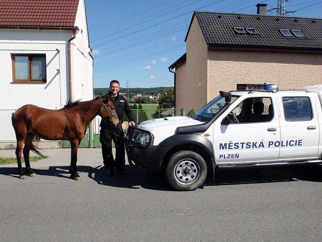 Klisna a zachránce. Koně v úterý chytala městská policie po plzeňské silnici