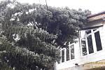 V Březině padly dva stromy do drátů elektrického vedení a na rodinný dům