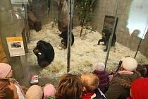 Vánoční krmení šimpanzů v plzeňské Zoo.