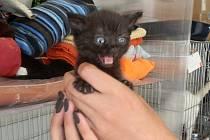 Koťata nalezená na Borech u Luny.