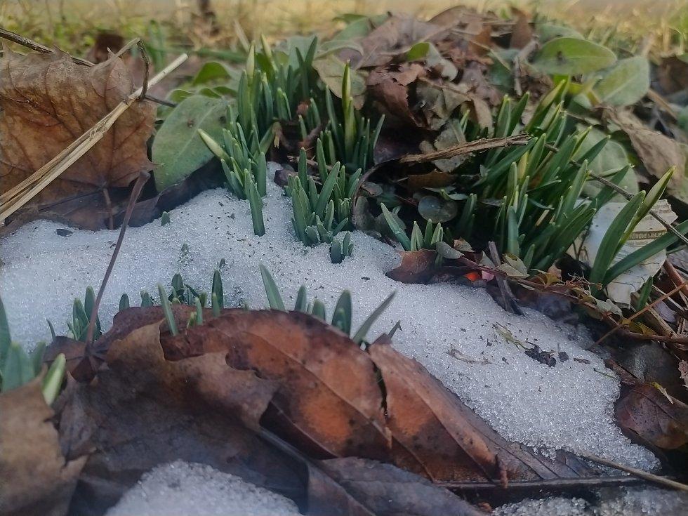 První letošní jarní kvítí.