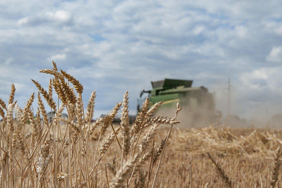 Pšeničné pole v Horní Lukavici
