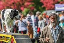 V Borském parku se konal už pátý ročník oblíbeného Psího dne.