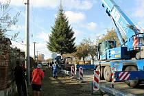 Třináct metrů vysoká douglaska tisolistá, která ozdobí náměstí Republiky v Plzni, rostla sedmnáct let u Domova svaté Zdislavy pro matky v nouzi v Radobyčicích