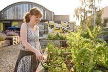 Plzeňané si zase mohou pěstovat zeleninu přímo v centru.