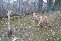 Hned čtyři stromy zničil neznámý vandal v ulici U Lomu na Slovanech