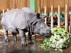 Nosorožec Baabuu oslavil dvanácté narozeniny