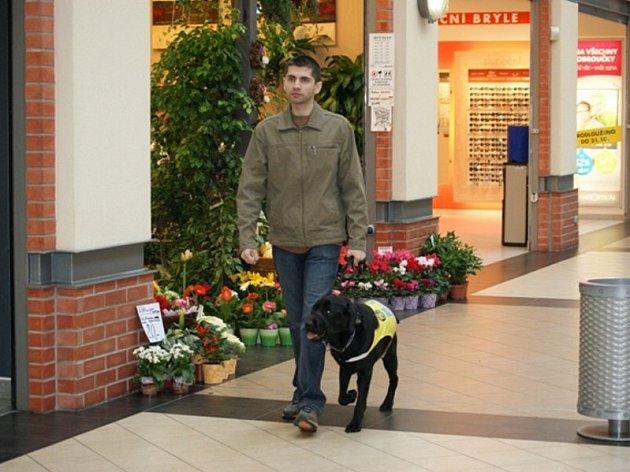 Láďa s černým labradorem Rokym vycvičeným u Pomocných tlapek jsou dnes už sehraná dvojice