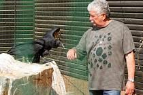 Oslavenec Václav Chaloupek s kondory v plzeňské zoo.