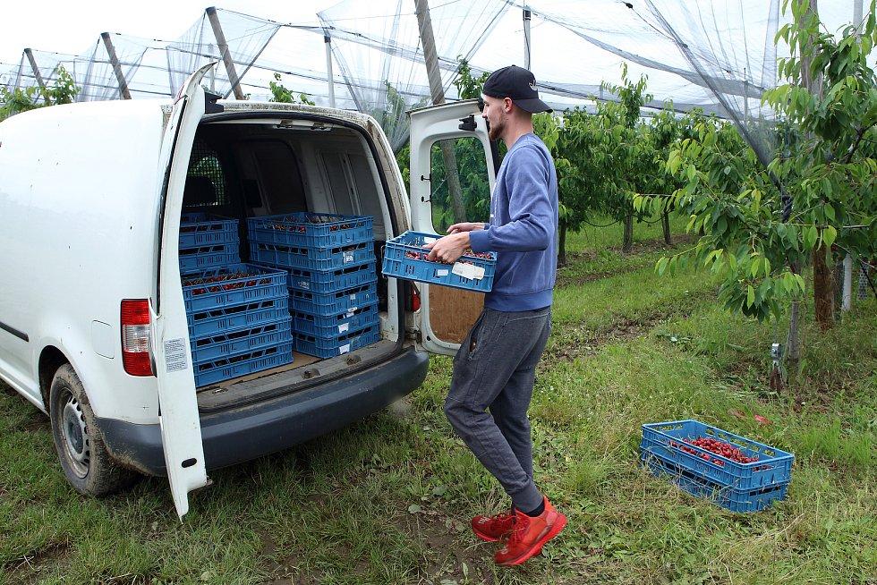 V Nebílovských sadech pokračuje prodej trhaných třešní. Milovníci těchto sladkých plodů si je mohou zakoupit přímo v sadech tento týden a pozdnější odrůdy zřejmě i v týdnu příštím. Cena je 99 korun za kilogram.