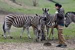 zebra Chapmannova ošetřovatelka Lenka Doxanská