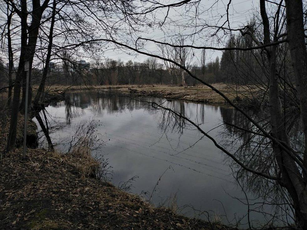 Radbuza ve směru toku do centra Plzně.