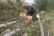 Dřevorubci začali kácet staré topoly u Velkého boleveckého rybníka