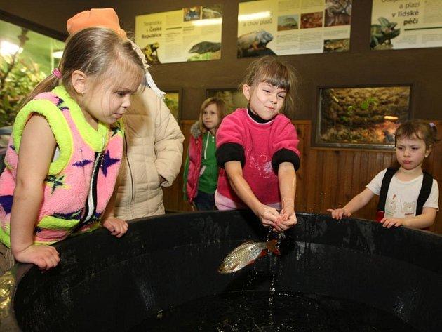 Asi padesát dětí si přišlo na Silvestra vylovit zlatou rybku do plzeňské zoologické zahrady