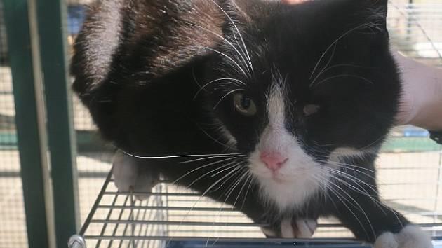 Čtyřletou kočku odchytili strážníci plzeňské městské policie na Doubravce.