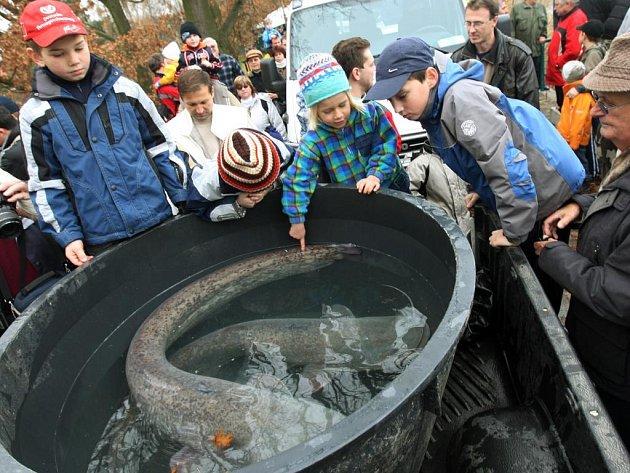 Výlov Seneckého rybníka