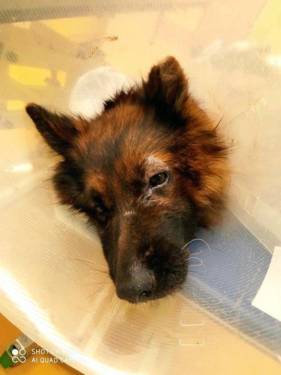 Týraní psi z plzeňských Malesic.