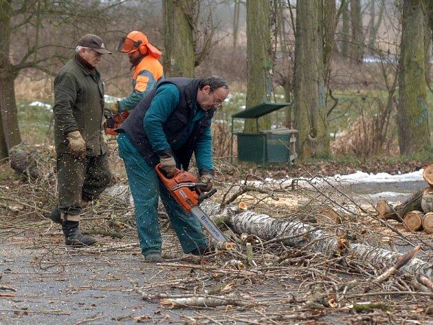 Sedmadvacet topolů kácí v těchto dnech odborná firma u parkoviště plzeňské zoo.  Podle dendrologů byly stromy nebezpečné a mohly by ohrožovat kolemjdoucí