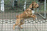 Psí útulek v Plzni na Borských polích