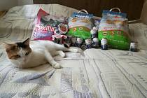 Dobrovolníci z organizace Fousky pomáhají opuštěným a zatoulaným kočkám. Potulná zvířata odchytnou a nechají na své náklady ošetřit.