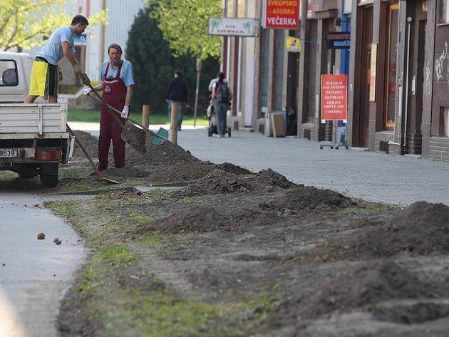 Nové duby a také stovky keřů vysazují zahradníci v těchto dnech na Koterovské ulici
