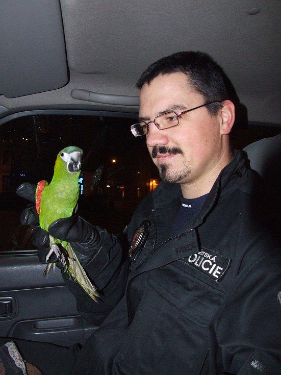 Městští strážníci z Plzně letos odchytávali různé druhy zvířat.