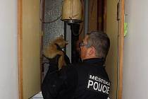 Záchrana kočky z ventilační šachty v Plzni-Doubravce